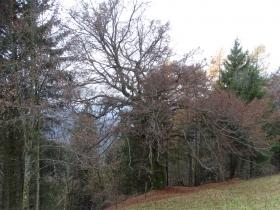 2016-11-20 monte Stigolo (33)