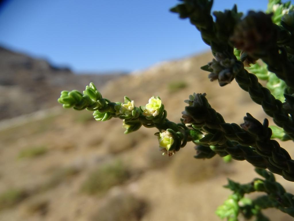 2018-Creta fiori (44)